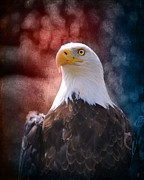 Fourth Of July Framed Prints - Eagle I Framed Print by Jai Johnson
