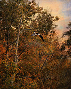 Autumn Landscape Art - Eagle in Flight 2 by Jai Johnson