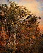 Autumn Landscape Art - Eagle in Flight by Jai Johnson