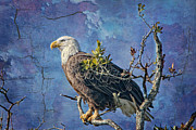 Eagle Prints - Eagle in the Eye of the Storm Print by Bonnie Barry