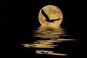 Reflecting Water Mixed Media Posters - Eagle in the Moonlight Poster by Shane Bechler