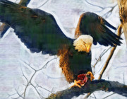 American Bald Eagle Painting Prints - Eagle on a Tree with Dinner Print by Clarence Alford