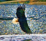 Eagle Paintings - Eagle Over River Bank by Clarence Alford
