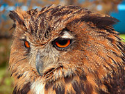 Graham Taylor Prints - Eagle Owl Print by Graham Taylor