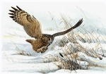 Owl Paintings - Eagle Owl on attack by Dag Peterson