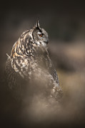 Nature Digital Art - Eagle Owl Portrait by Andy Astbury