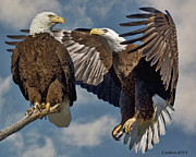 American Bald Eagle Prints - Eagle Pair 3 Print by Larry Linton