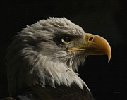 Eagle Photos - Eagle Profile 3 by Ernie Echols