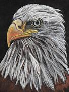 Bald Eagle Pastels Metal Prints - Eagle Profile Metal Print by Tracey Hunnewell