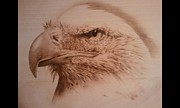 Portrait Pyrography Framed Prints - Eagle Framed Print by Rodney Balderas