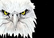 Eagle Print by Shashi Kumar
