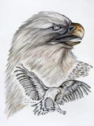 Buzzard Drawings Prints - Eagles  Print by Barbara Cleveland