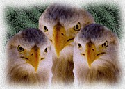 Digital Images Prints - Eagles Three Print by Garry Staranchuk