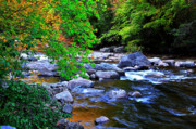 Rushing Stream Acrylic Prints - Early Autumn along Williams River Acrylic Print by Thomas R Fletcher