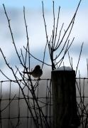 Fence Digital Art Originals - Early Bird by Holly Ethan
