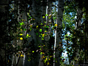 Prescott Framed Prints - Early Fall Colors in Front of the Aspens Framed Print by Aaron Burrows
