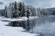 Winterscape Posters - Early Fall Storm in Yellowstone Poster by Sandra Bronstein