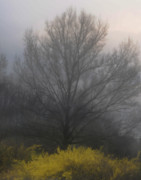 Spring Scenes Digital Art Metal Prints - Early Morning Fog Metal Print by Gerlinde Keating - Keating Associates Inc