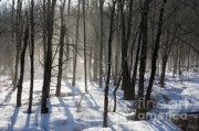 New England Winter Originals - Early morning fog in a New Hampshire forest by Erin Paul Donovan