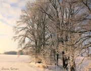 Snow-covered Landscape Originals - Early Morning in Winter by Amanda Kiplinger