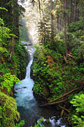 Sol Posters - Early morning light at Sol duc waterfall in Olympic National park Poster by Pierre Leclerc