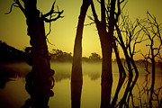 Dead Trees Prints - Early Morning Mist at the River Print by Douglas Barnard