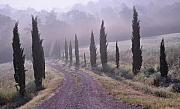 Cypress Trees Photos - Early Morning Mist in Tuscany by Marion McCristall