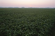 Natural Forces Metal Prints - Early Morning Mist Over Soybean Fields Metal Print by Brian Gordon Green