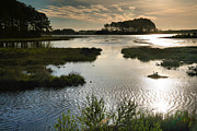 Salt Marsh Photos - Early Morning On Beach Drive III by Steven Ainsworth
