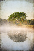 Peaceful Pond Posters - Early Morning Reflections Poster by Darren Fisher