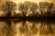 Golden Light Photos - Early Morning Reflections by Marilyn Hunt
