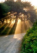 Michelle Calkins - Early Morning Sunlight