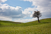 Lonely Tree Prints - Early Spring Print by Semmick Photo