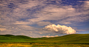 Beards Photo Prints - Early Summer Wheat in the Palouse Print by David Patterson