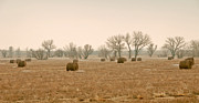 Hay Originals - Earlying Morning Hay Bails by James Steele