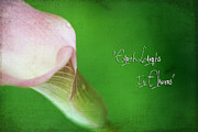 Calla Lilly Posters - Earth Laughs in Flowers Poster by Darren Fisher