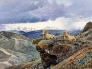 Salmon River Idaho Paintings - East Fork Rams by Steve Spencer