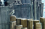 Brooklyn Bridge Painting Prints - East River Gull Print by Tom Hedderich