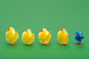 Standing Out From The Crowd Framed Prints - Easter chicks in a line Framed Print by Richard Thomas