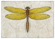 Flight Mixed Media Posters - Eastern Amberwing Dragonfly Poster by Charles Harden