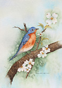Bluebird Painting Originals - Eastern Bluebird by Grace Ashcraft