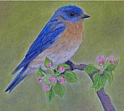Bluebird Pastels - Eastern Bluebird by Laura Savi