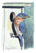 Tony  Nelson - Eastern Bluebird