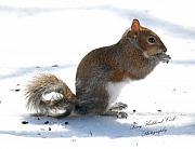 Terry Kirkland Cook - Eastern Grey Squirrel