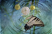 Insects Photo Originals - Eastern Tiger Swallowtail on Buttonball Bush by Bonnie Barry