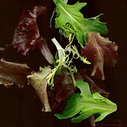 Lettuce Photo Originals - Eat Your Greens by Brigetta  Margarietta