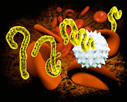 Virion Art - Ebola Virus by Victor Habbick Visions and SPL and Photo Researchers