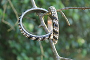 Diamond Bracelet Originals - Ebony Bang by Courtney Hancock
