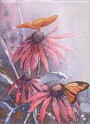 Robynne Hardison - Echinacea and Butterflies