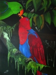 Parrot Print Prints - Eclectus Parrots -roratus macgillivrayi Queensland Australia Print by Una  Miller